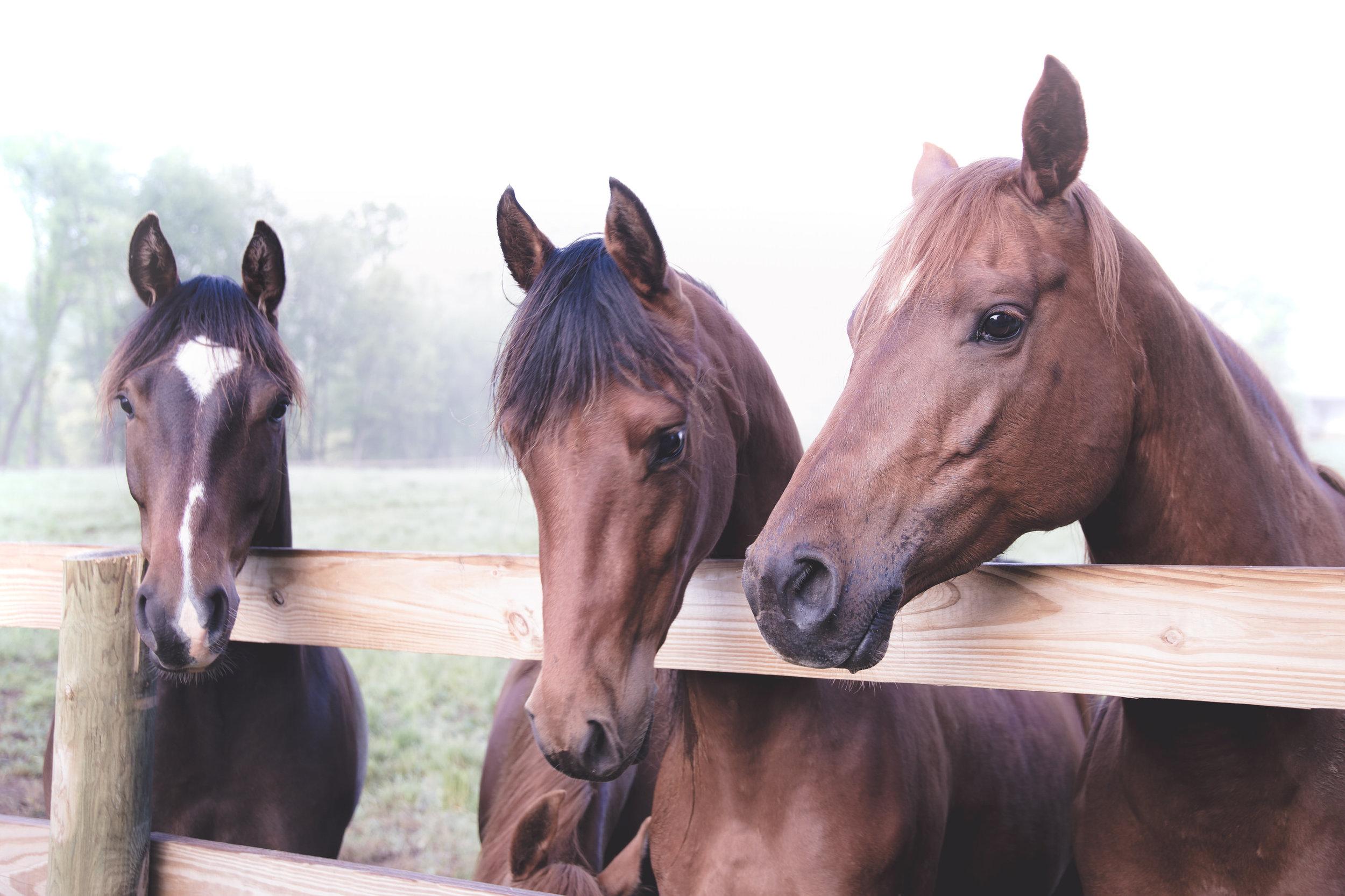 ©TonyaMerkePhotography_Fog+Horse-3.jpg
