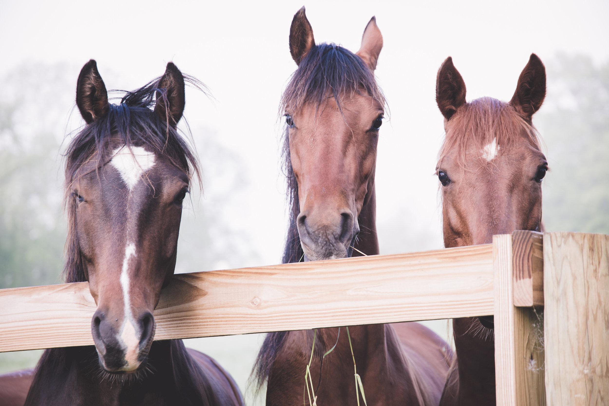 ©TonyaMerkePhotography_Fog+Horse-11.jpg