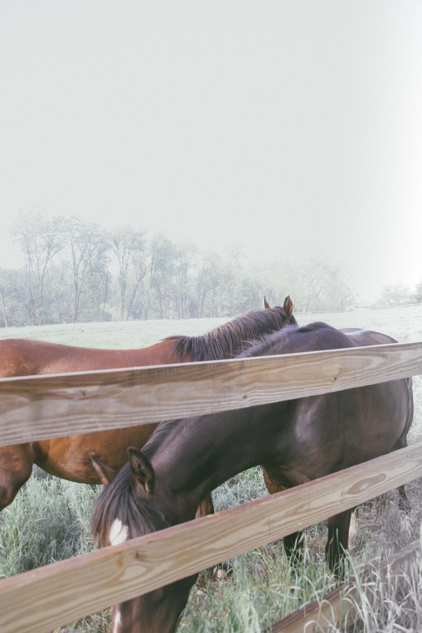 ©TonyaMerkePhotography_Fog+Horse-15.jpg