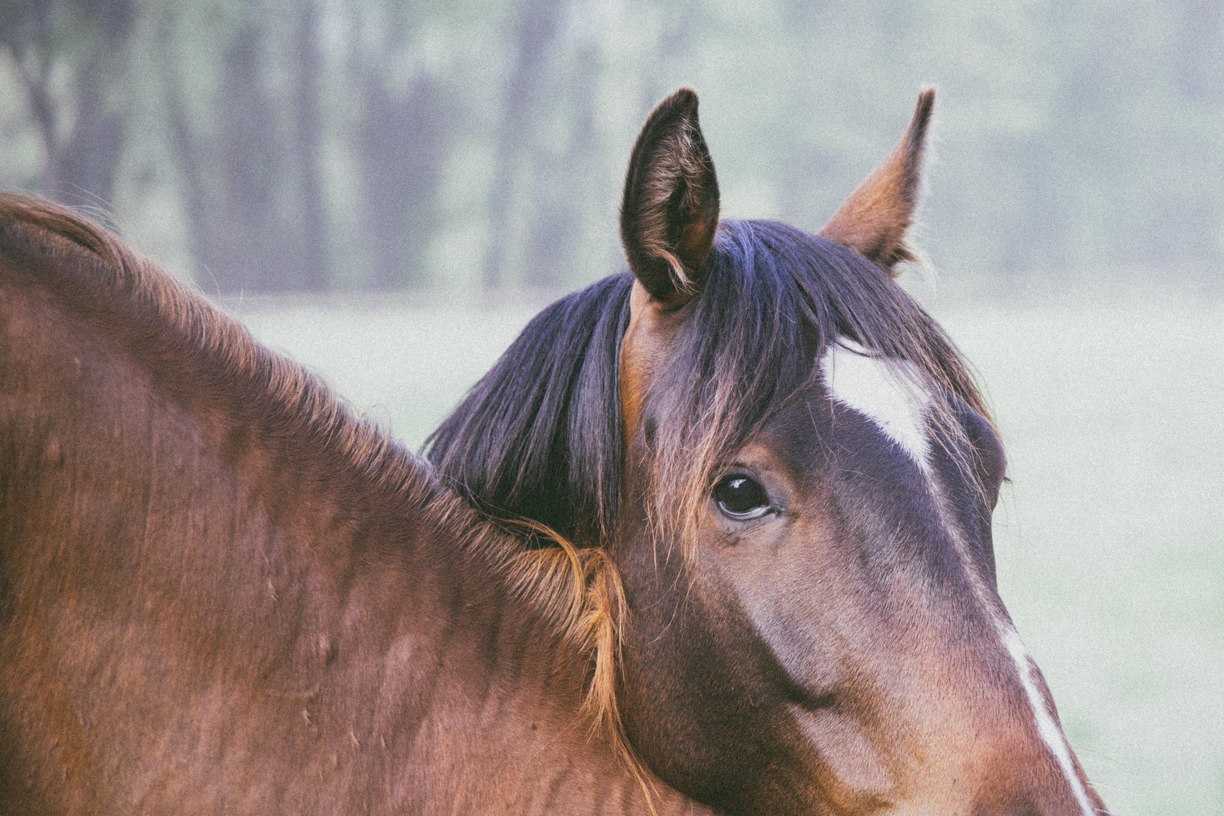 ©TonyaMerkePhotography_Fog+Horse-2.jpg