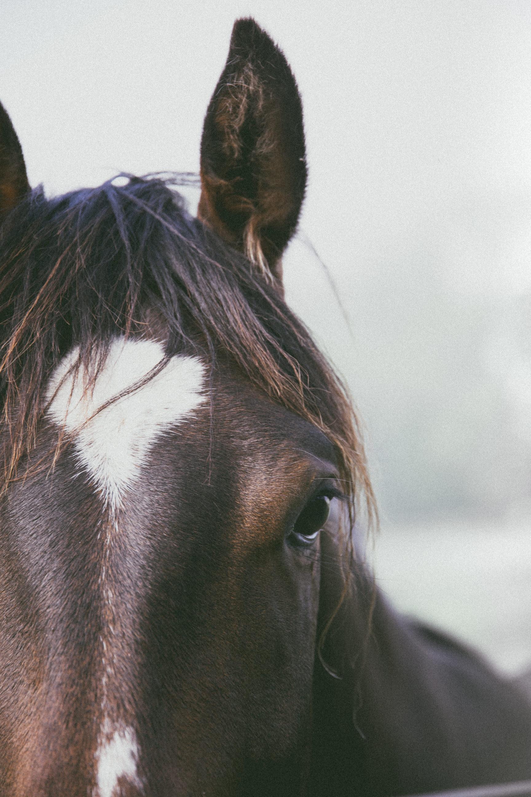 ©TonyaMerkePhotography_Fog+Horse-13.jpg