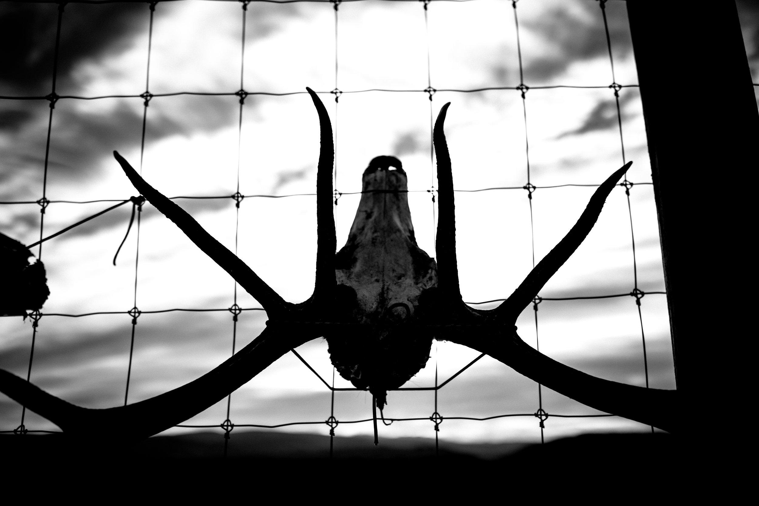 ©TonyaMerkePhotography_Skulls 2.jpg