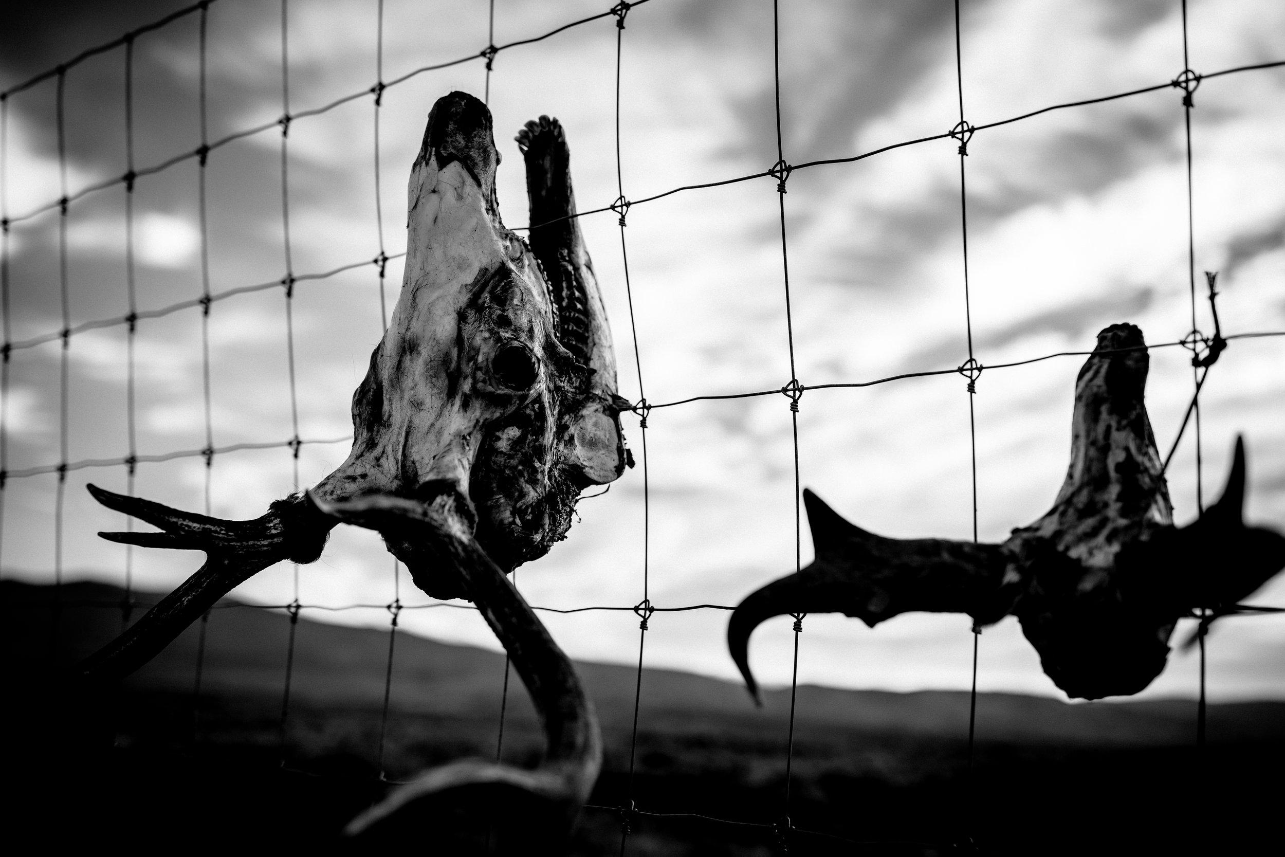 ©TonyaMerkePhotography_Skulls 4.jpg