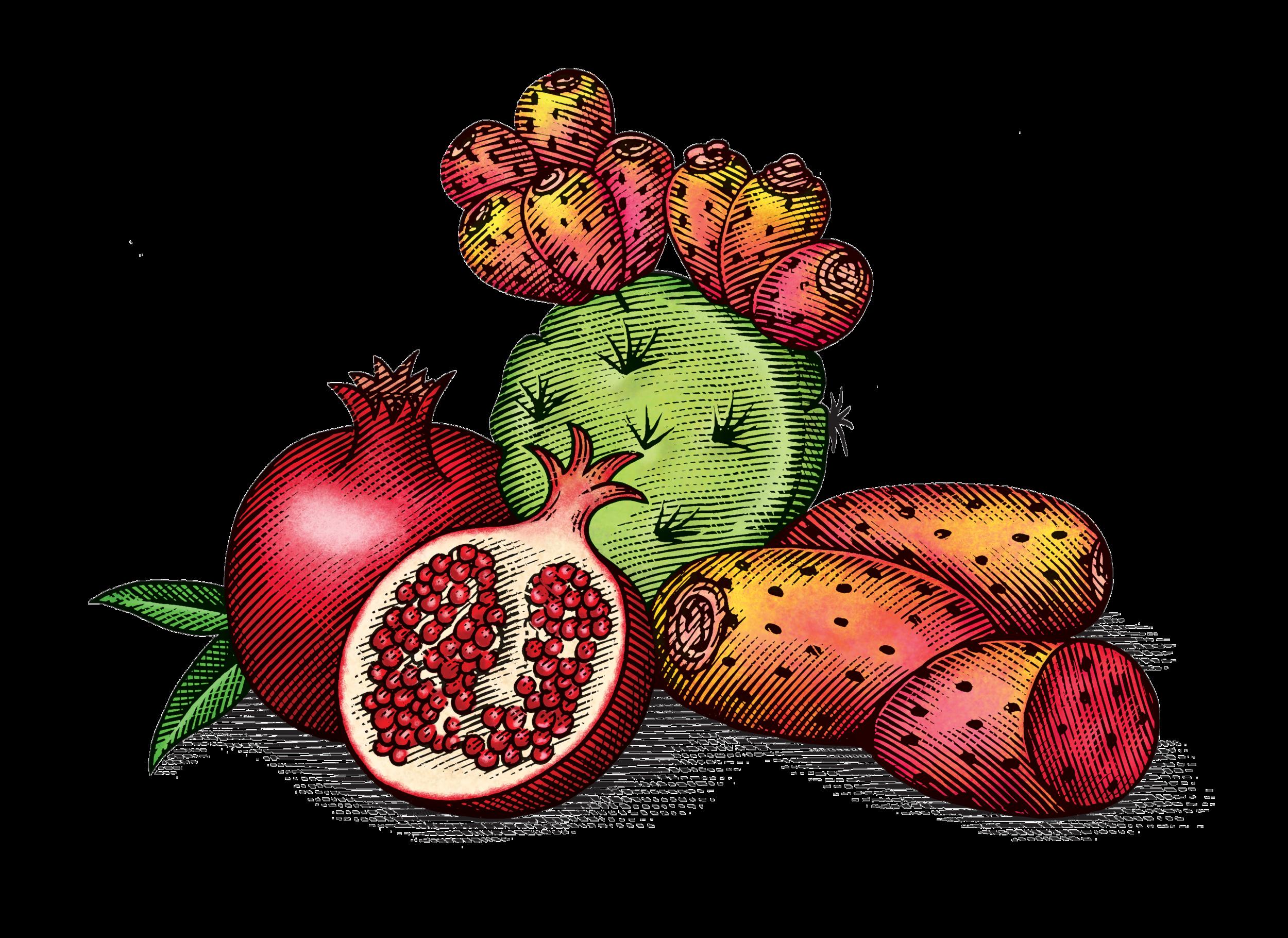 PricklyPearPomegranate.png