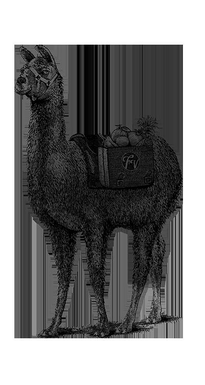 Llama_Thin-Lines_Web.png