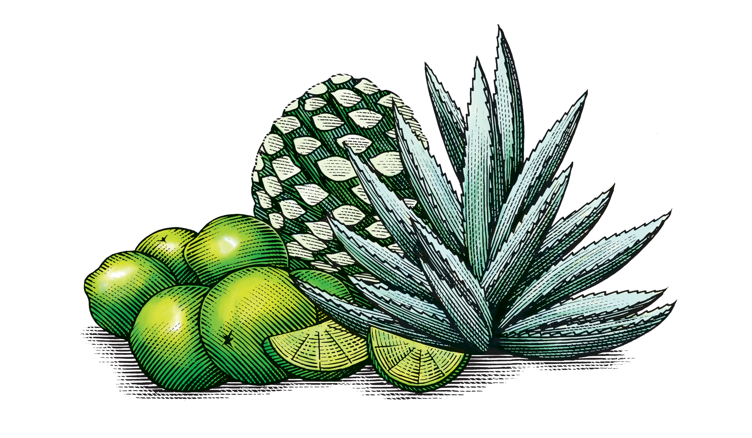 LimeAgave.png
