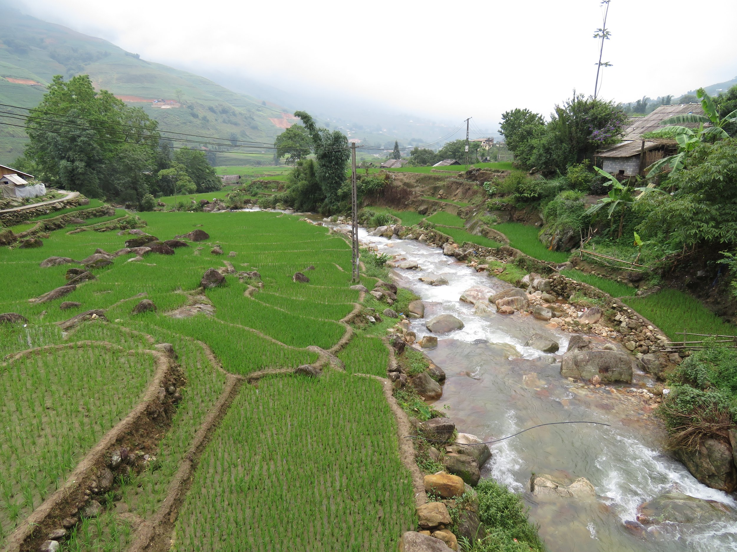 Rice paddies along the hiking route