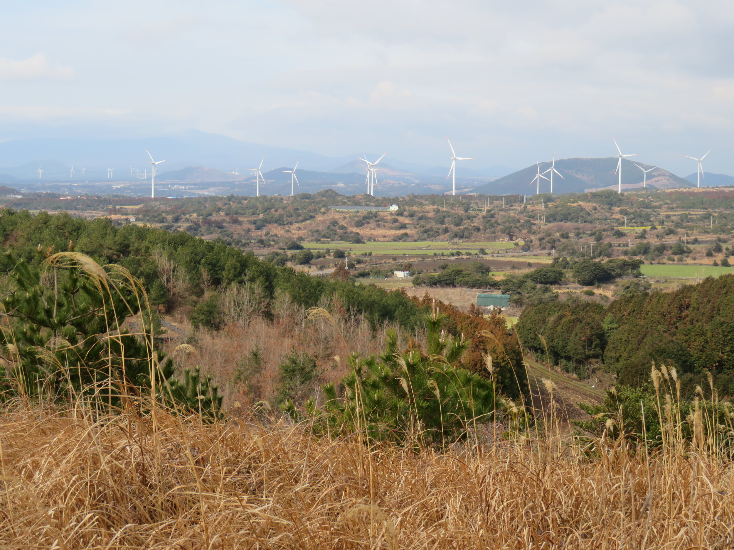 A high proportion of Jeju's energy is generated by wind power
