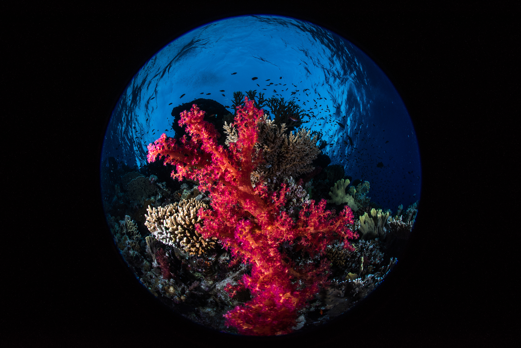 THE RED SEA PROJECT