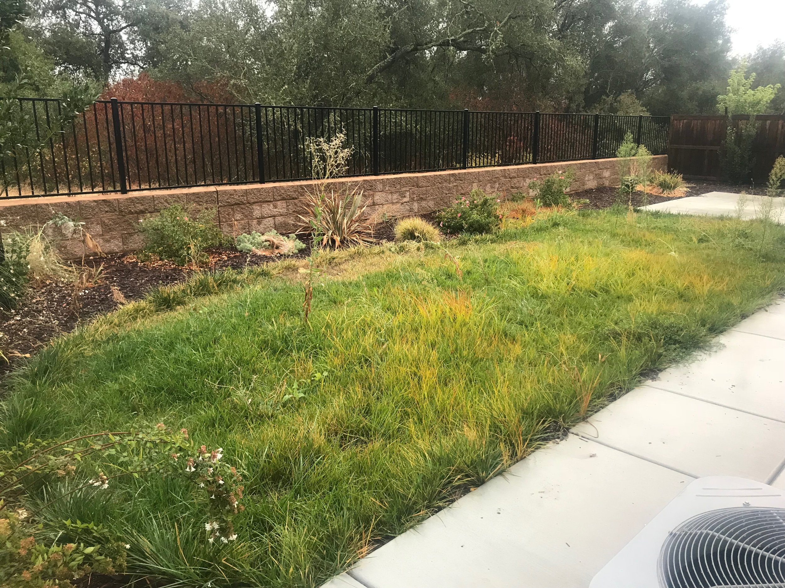 landscaping-rocklin1.jpeg