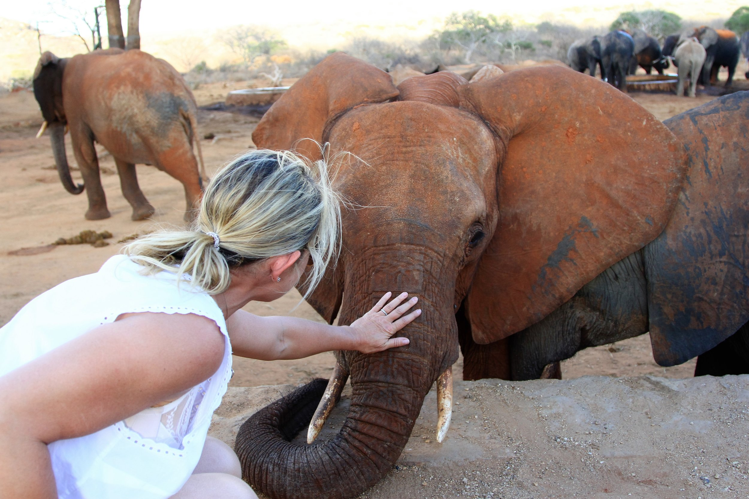 Getting up close to the baby elephants.JPG