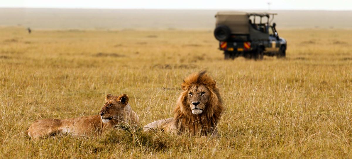 Wildlife Safari -