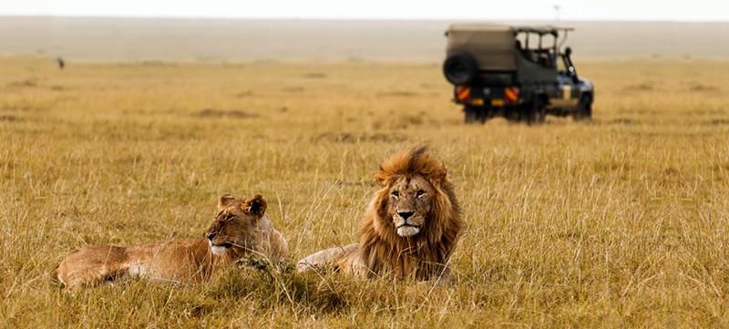 Wildlife tile mid.jpg