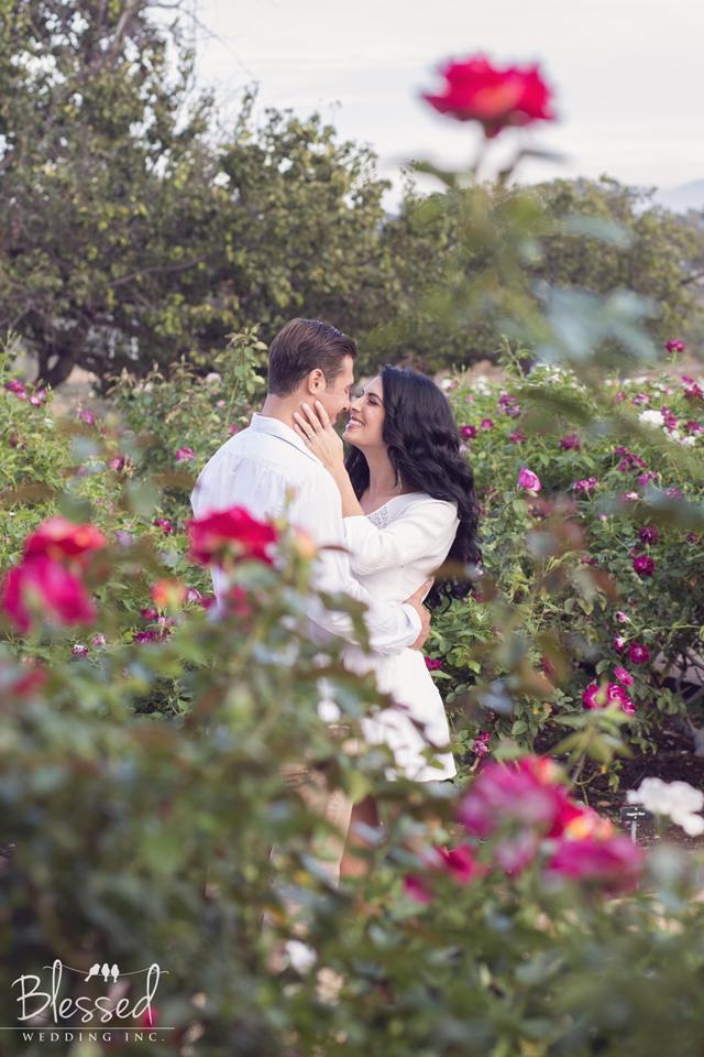 Rose Garden Engagement Photogrpahy