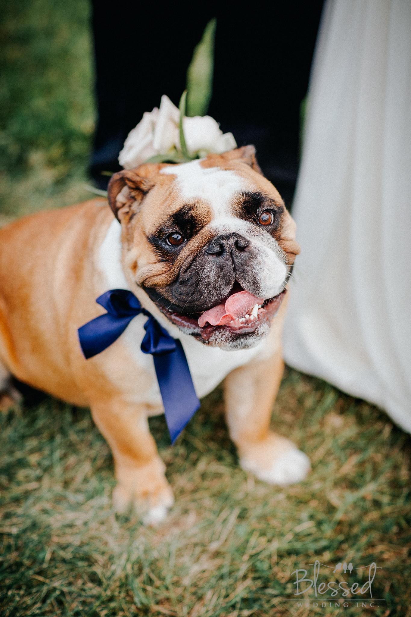 Destination Wedding Photography Minnesota By Blessed Wedding Photographers-28.jpg