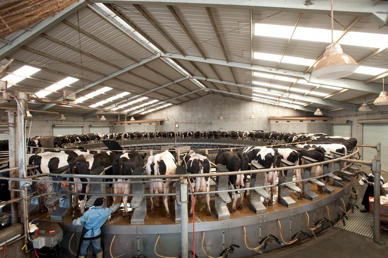 Fost Famrs Rotary Dairy.jpg
