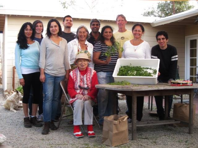 We had a Thanksgiving Moringa Harvest and invited some local Moringa graduates and their families  to help.  Each family brought a dish to share from their culture. My mother, front and center joined n the fun.  She had been so much a part of the early days of hard long hours.  It was a joy for her to see my students  help and feel like one big family.