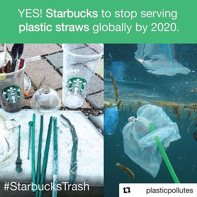 #Repost @plasticpollutes with @get_repost ・・・ TODAY coffee giant @Starbucks announced a phase out of plastic straws globally in its stores by 2020. The announcement came after months of pressure by more than 20 environmental organizations asking Starbucks to stop polluting the planet with single-use plastic. Read more using the link in our bio. @NoPlasticStraws #StarbucksTrash #breakfreefromplastic #NoPlasticStraws #NotSoGreenStraws #plasticpollution #oceans