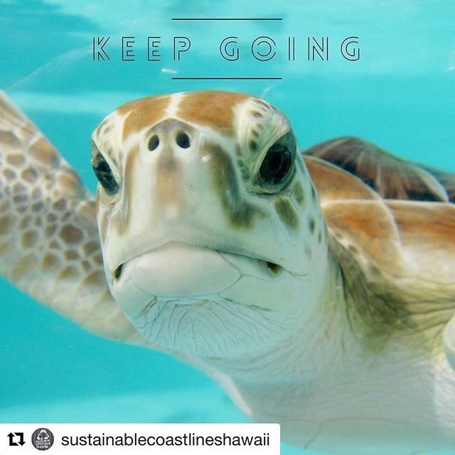#Repost @sustainablecoastlineshawaii with @get_repost ・・・ For real folks, keep going. A plastic straw replaced with a cap that takes more plastic to make capped on a plastic cup still used for a few minutes and then thrown away. Made out of plastic that sinks so if it does get into the ocean it sinks to the bottom. Kudos for a tiny step in the right direction but we got a long way to go @starbucks and everyone else thinking banning straws is a huge win. In reality it's a distraction from the bigger problem. Let's show real progress. Keep going. Graphic found via our homies at @surfrideroahu. Check them out. #keepgoing #strawban #greenwashing #plasticpollution #marinedebris #honu #honuworld #breakupwithplastic #himarinedebris #airstrategy #seaturtle #starbucks