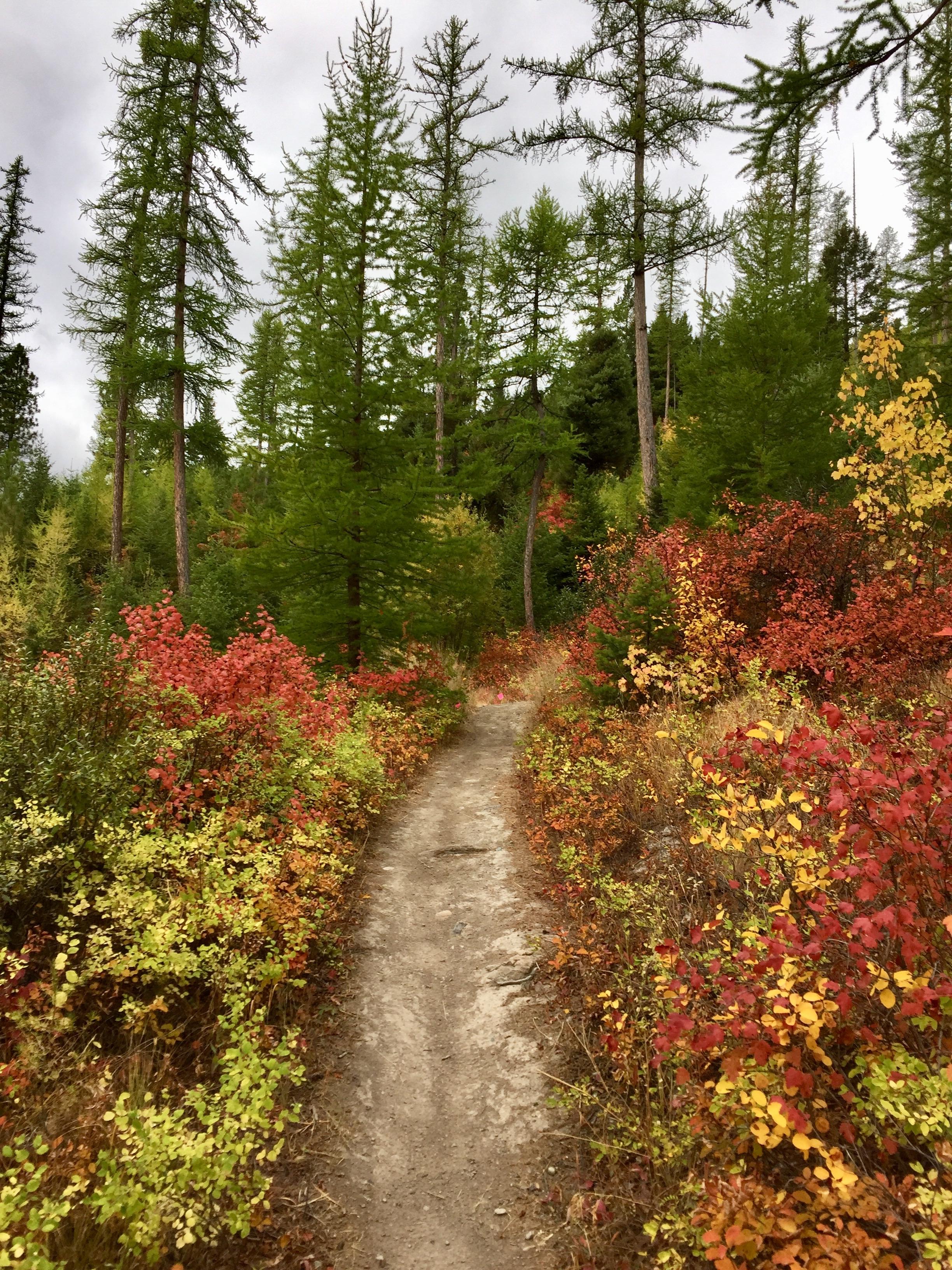 foys to blacktail trails trail marathon ftbtIMG_6652.JPG