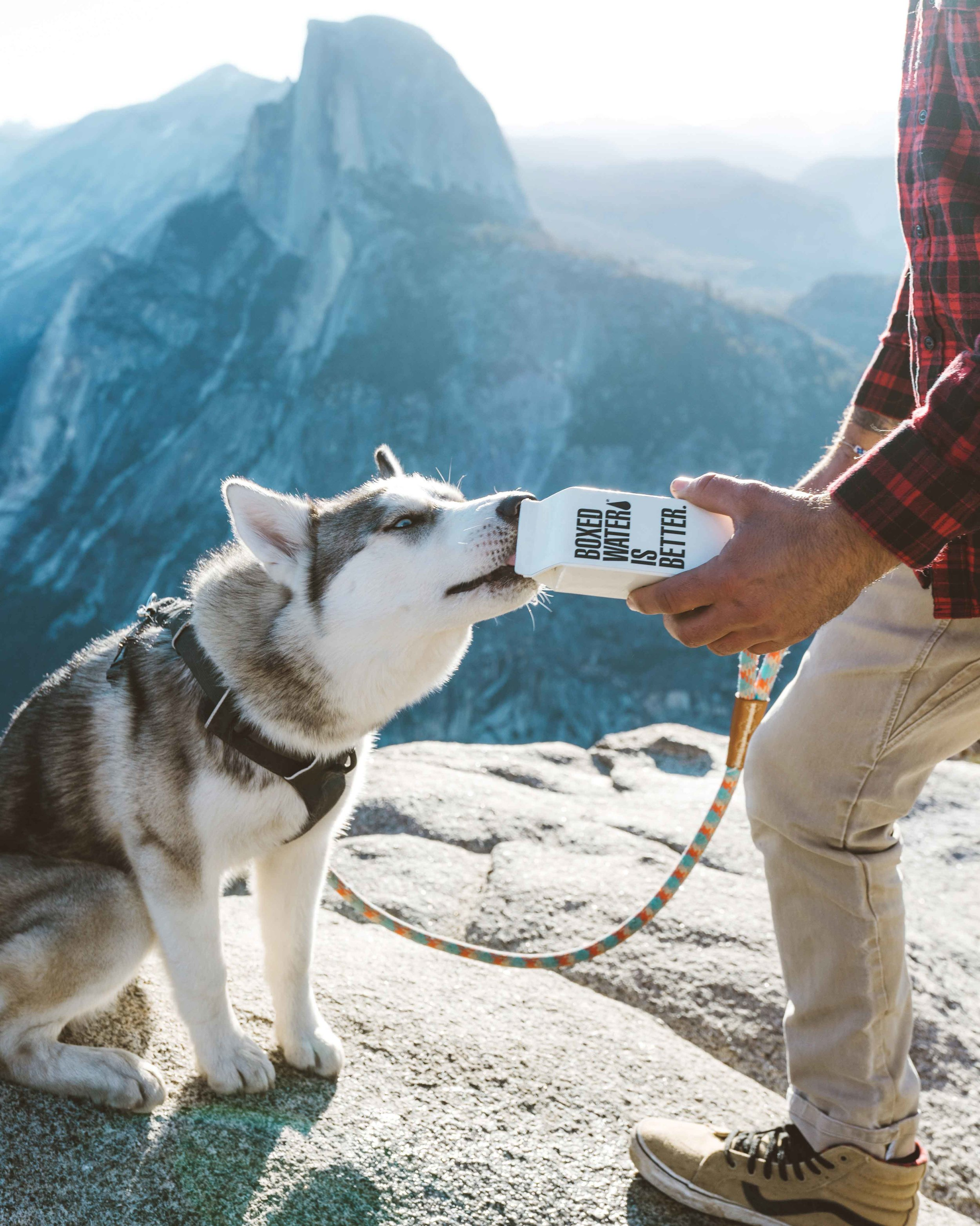 UTI in Dogs: Photo by  Boxed Water Is Better  on  Unsplash