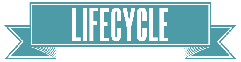 LIFECYCLE_BANNER.png