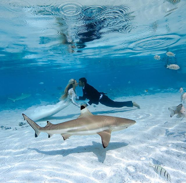 """I love my WIFE!! @oceanramsey and I just got married!! Not many women would be ok traveling to a remote shark filled place with only solar power, cold water from rain catchment, and mosquitos net beds in thatch huts for their wedding but i was lucky enough to find someone cool enough it was actually her idea because there are more sharks than people in this remote & wild part of French Polynesia. So stoked to be married to the love of my life, incredible person, she takes my breath away everyday and not just because we had to exhale all our air to get underwater for this shot. Much lava to our ohana who made the long journey and helped huge to make it unforgettable capturing some thousand plus fun and amazing photos & vida we are going to be going through for a long time, This one of my favorites shot by my best man and a Jawsome friend @big_island_billy with the help of my official bad-ass sharky brother in law @eliasharks and his wife/pro photographer @hbutter """"outlaws ;)"""" who shot most of our wedding and my wife's amazing maid of honor @michelelbarnes my fun niece @isabella_abusaid and nephew @truegritphilosophy so proud and grateful for them. So grateful for ohana, sharks, and especially to finally officially be married to the shark of my dreams ;) #MrsShark @oceanRamsey #Mrandmrsshark So many friends and family we wanted to invite but with limited accommodations, limited flights, and limited space on the small boats we took for hours to get there we kept it intimate but thank you to all those we are kind and supporting of us and our one ocean ohana @oneoceandiving so many people we are so grateful have helped us along the way and so many sharks, like curly girl who brought us together and have kept us together for 12 years now. #itsofficial #stoked #mrshark #loveofmylife #sharkwedding can't wait to share more pics and funny vids when we get back to WiFi in a few days 🦈❤️🦈 Thank you everyone & thank you @oceanramsey for being my WIFE! Love you forever"""