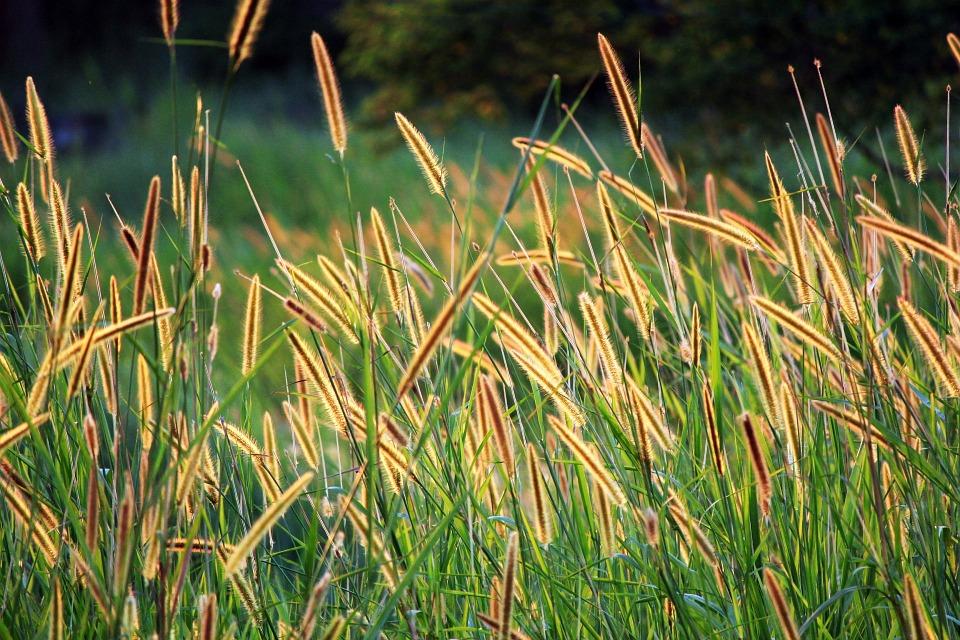 grass-seed-164422_960_720.jpg