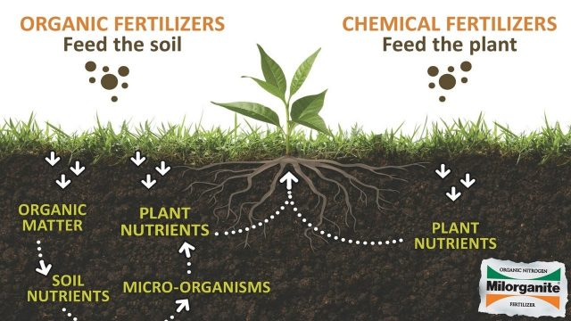 organic vs synthetic 2.jpg