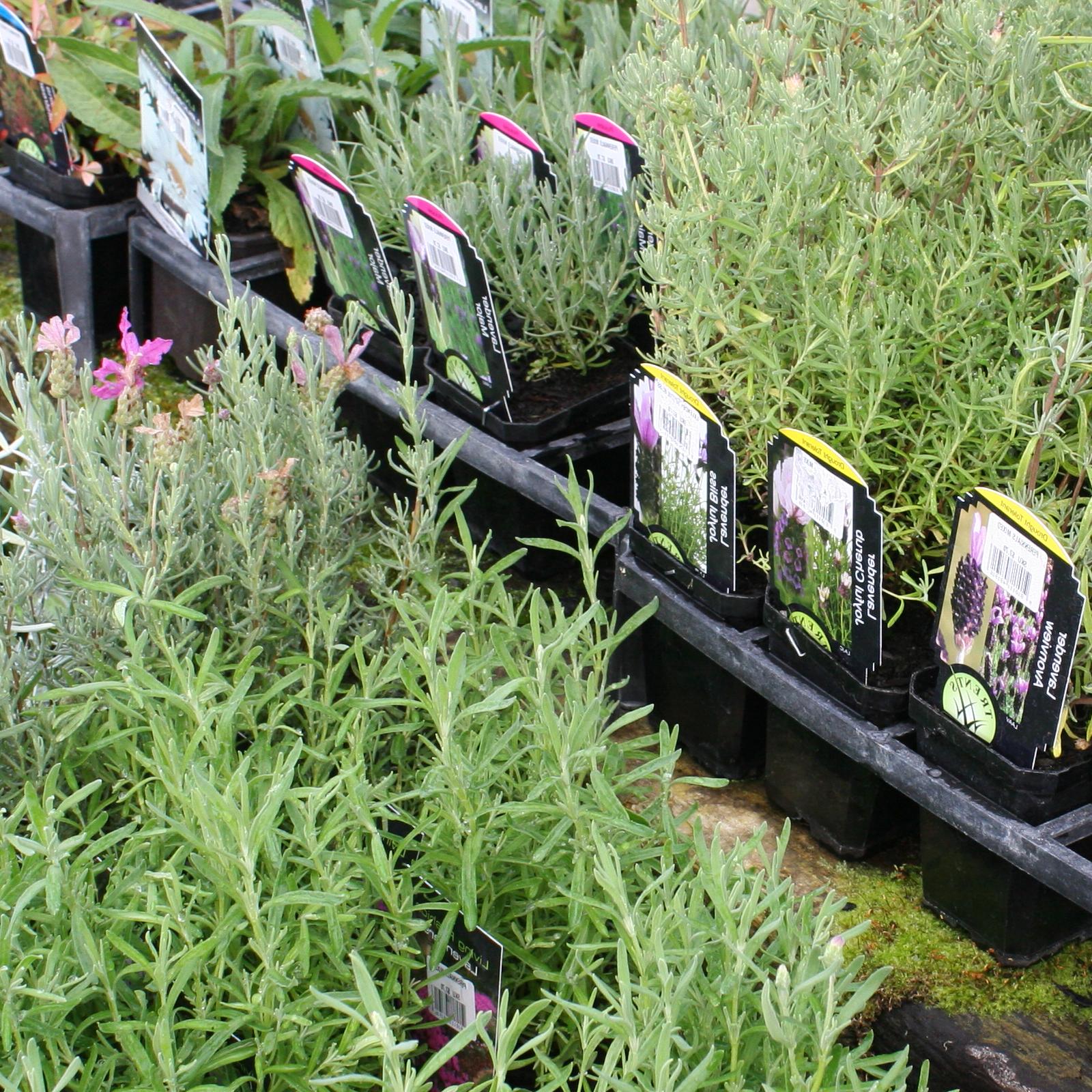 Perennials3 for $20 -