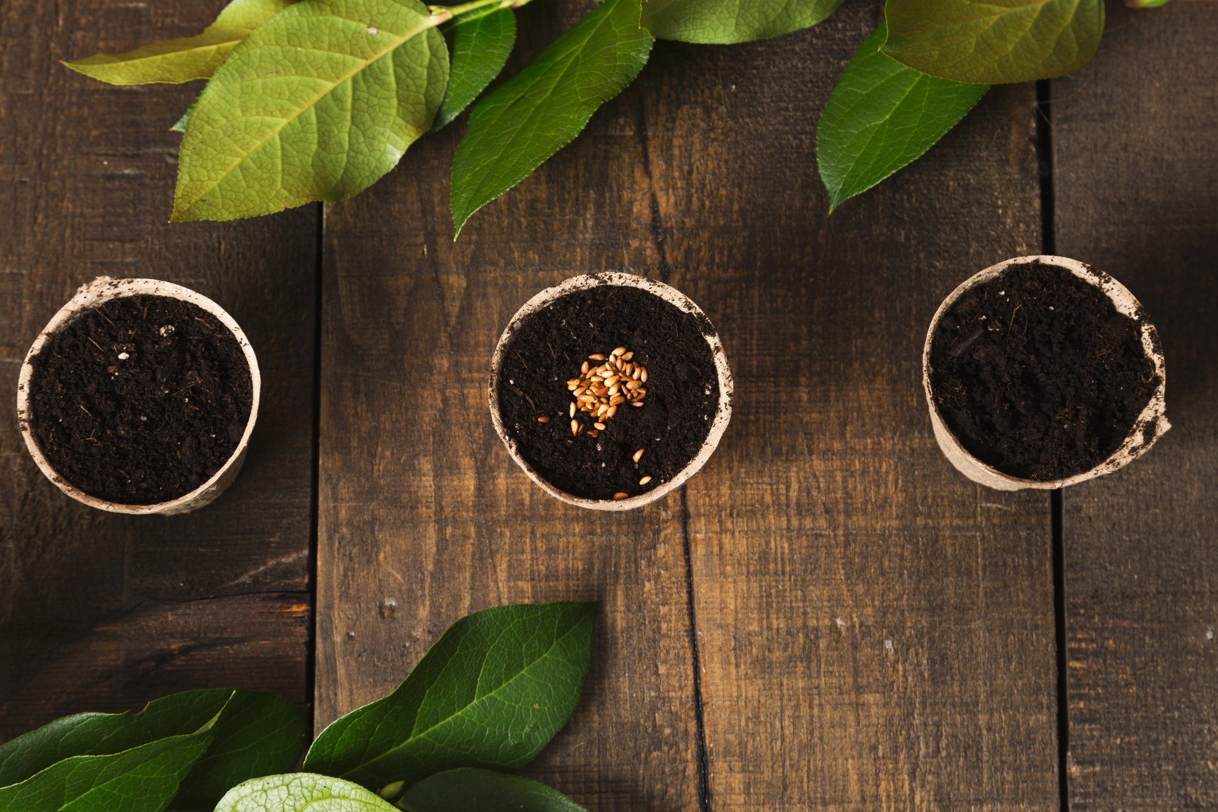 greenhouse-gardening_4460x4460.jpg