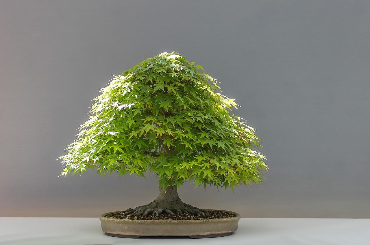 bonsai-1805494_1280.jpg