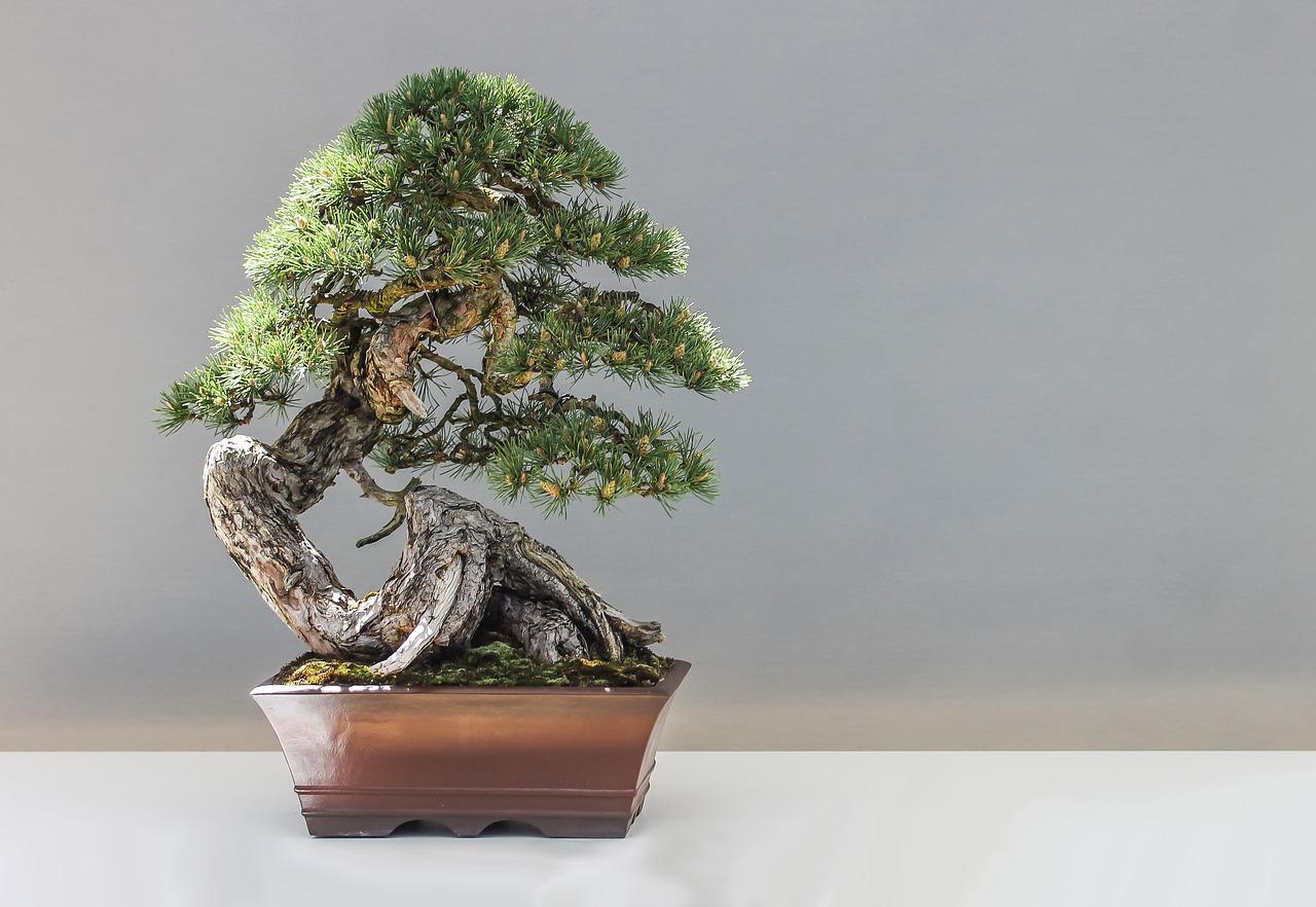 bonsai-1805501_1280.jpg
