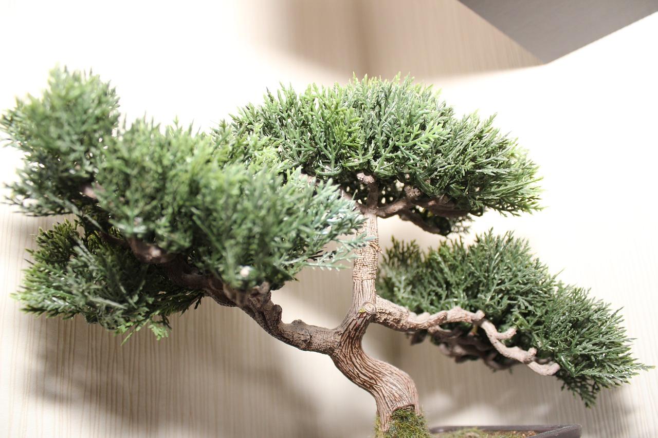bonsai-tree-738463_1280.jpg