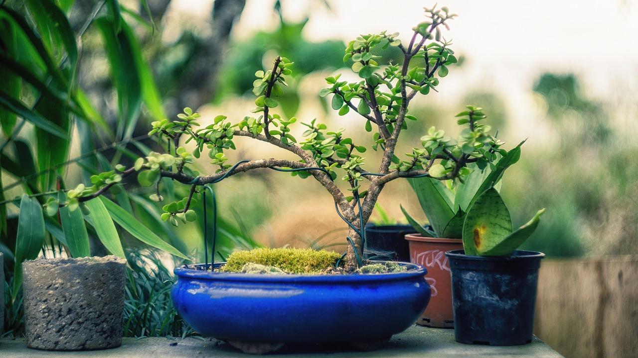 plant-1645812_1280.jpg