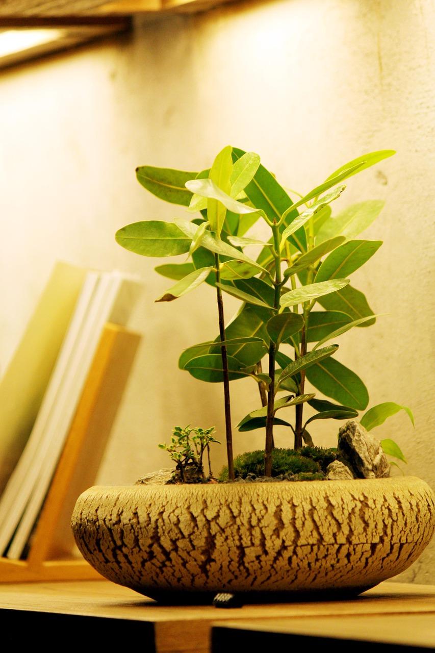 bonsai-616930_1280.jpg