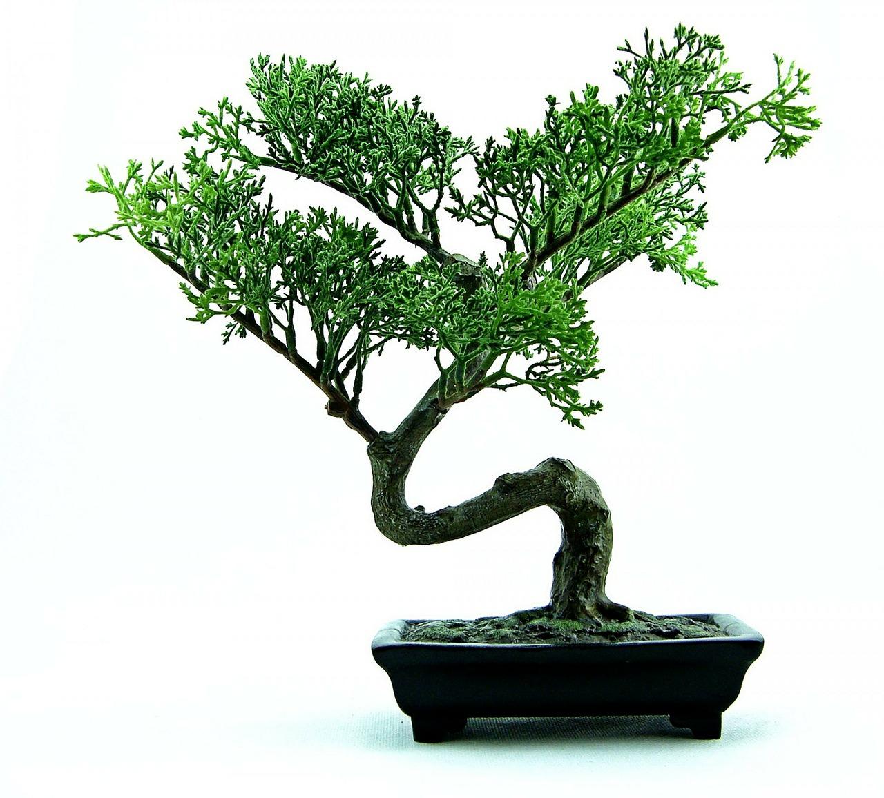 bonsai-316573_1280.jpg