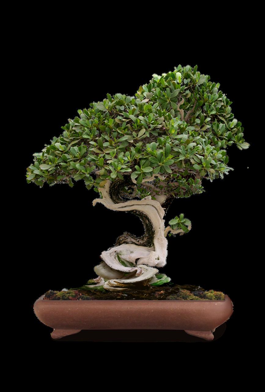 bonsai-1856731_1280.png