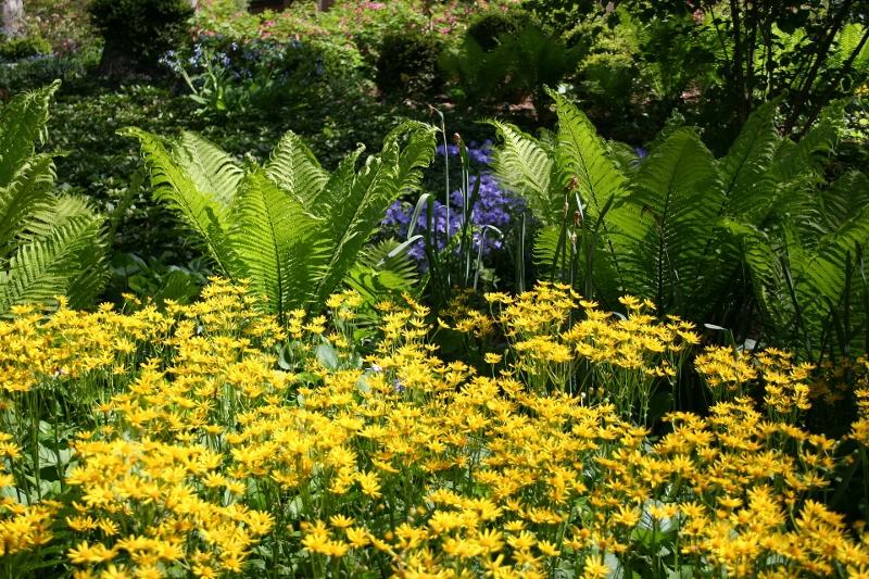 summer-garden-1275388_1920 (800x533).jpg