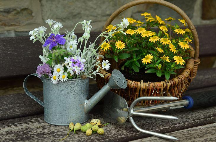 flowers-779317__480.jpg