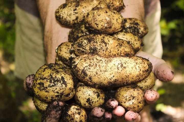potatoes-1866415__480.jpg