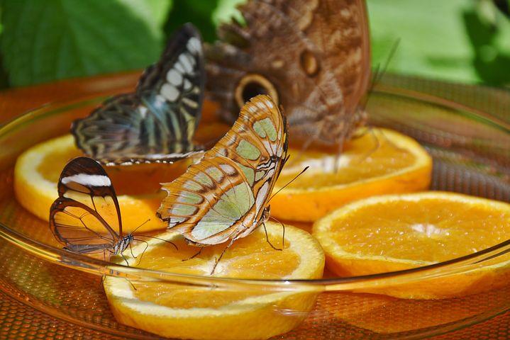 butterflies-1544008__480.jpg
