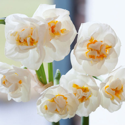 Polyanthus Bridal Crown