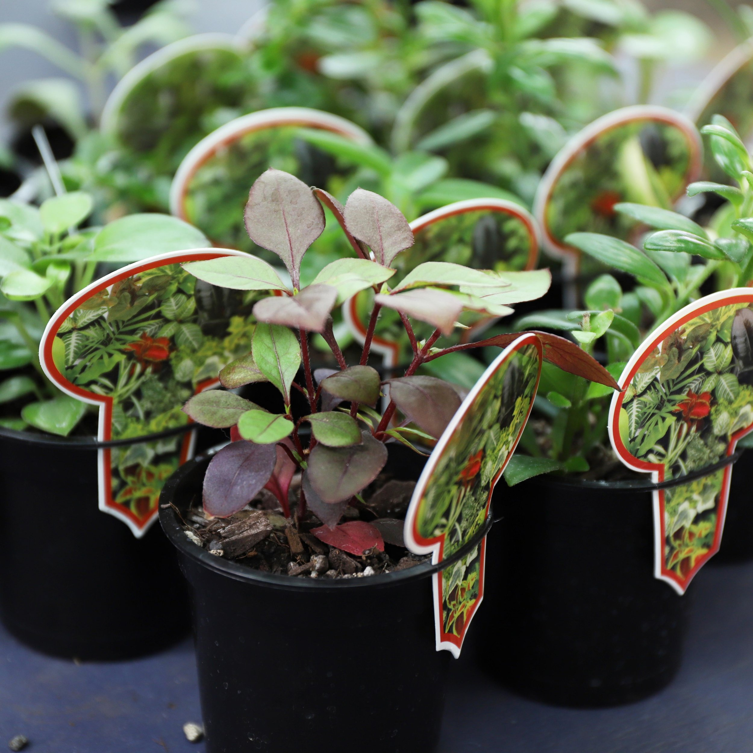 Baby House Plants3 for $12 -