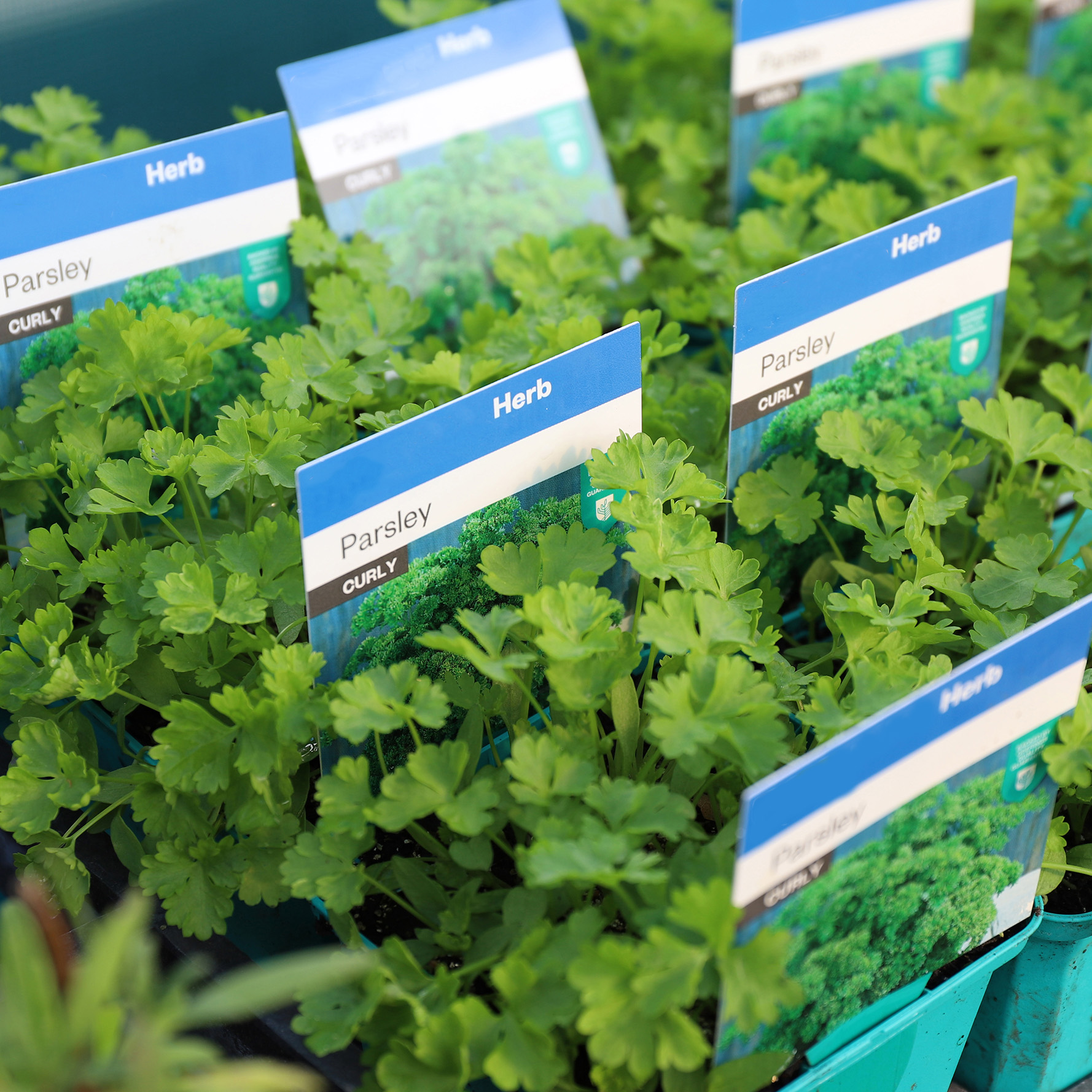 Herbs3 for $12 -