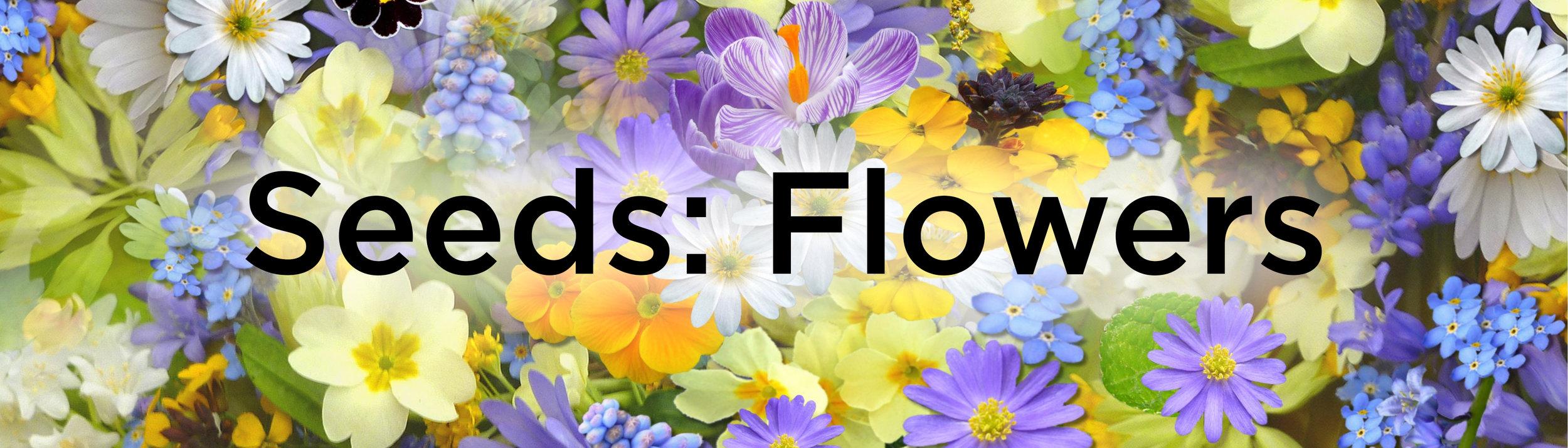 flowers-banner.jpg
