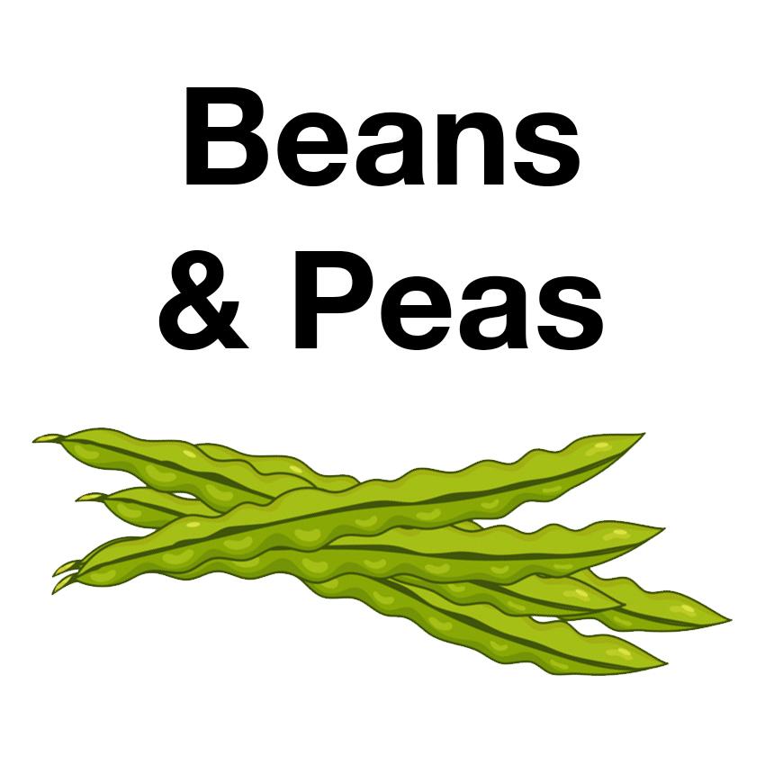 beans-icon.jpg