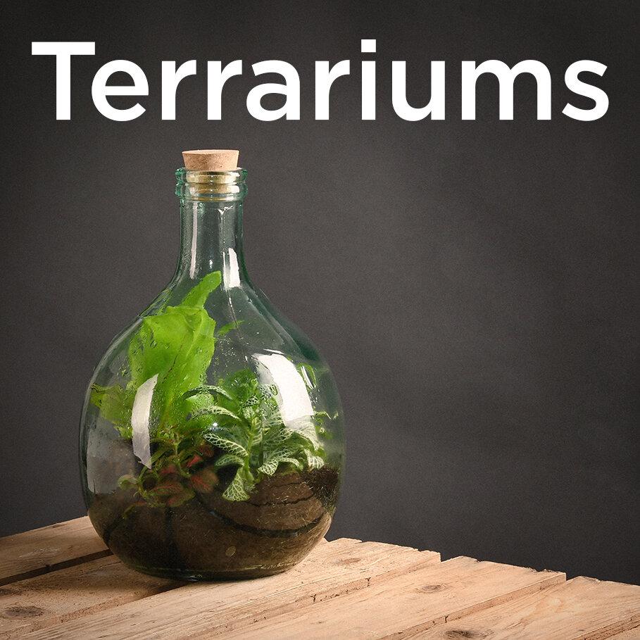 terrarium-icon.jpg