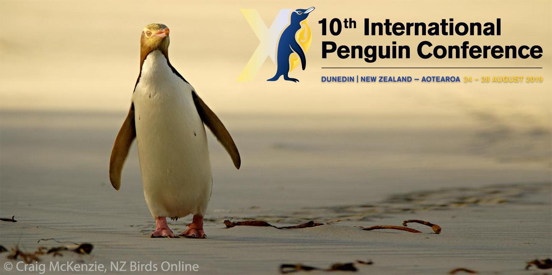 Yellow-eyed penguin. Image © Craig McKenzie, NZ Birds Online