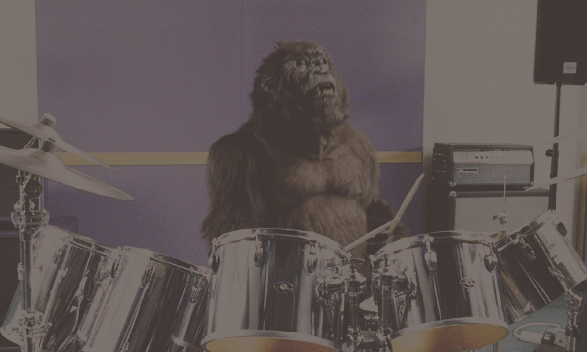 Cadbury's Gorilla.jpg